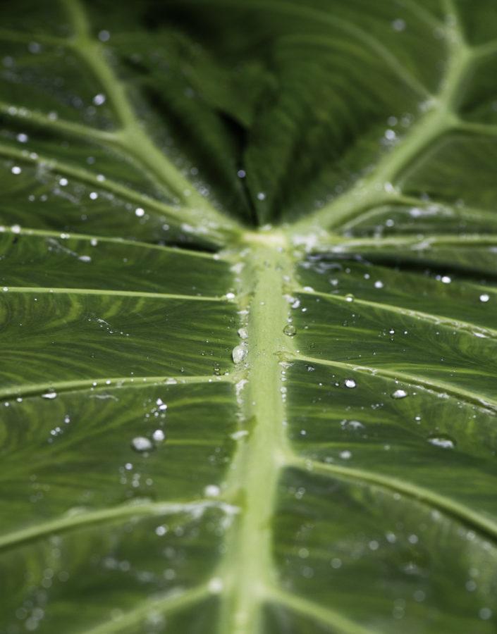 Folha do Jardim Botânico do Inhotim em Brumadinho
